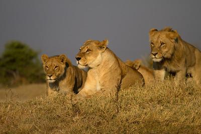 Botswana 2011